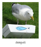 Seagull by Charlotte Gale